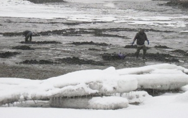 clamming_winter