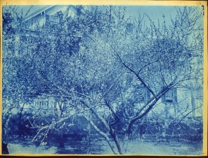 Tree and house cyanotype by Arthur Wesley Dow
