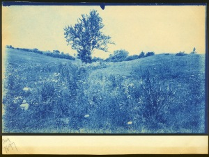 Tree 1897 cyanotype by Arthur Wesley Dow