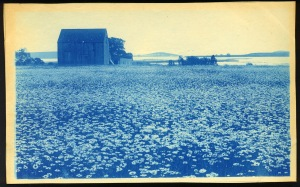 Daisies and barn cyanotype by Arthur Wesley Dow