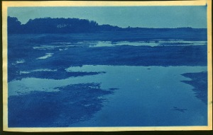 Wet marsh cyanotype by Arthur Wesley Dow