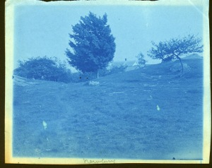 Windblown tree cyanotype by Arthur Wesley Dow