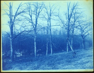 Woods and field cyanotype by Arthur Wesley Dow