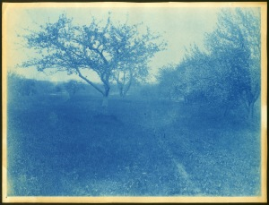 Flowering trees cyanotype by Arthur Wesley Dow
