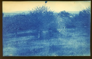 Orchard cyanotype by Arthur Wesley Dow