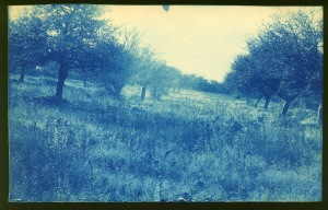 Meadow and trees cyanotype by Arthur Wesley Dow