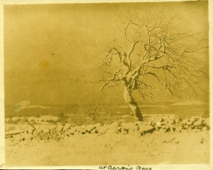 Tree at Aaron's cyanotype by Arthur Wesley Dow