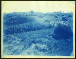 meadow and hay cyanotype by Arthur Wesley Dow