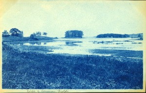 Wetland cyanotype by Arthur Wesley Dow