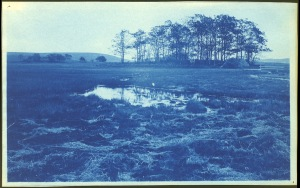 Hay island and hill cyanotype by Arthur Wesley Dow