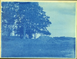 Forest and fields cyanotype by Arthur Wesley Dow