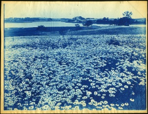 daisies and river cyanotype by Arthur Wesley Dow