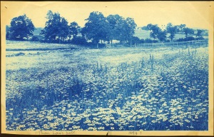 Fields and fence cyanotype by Arthur Wesley Dow