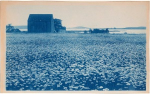 Barn and daisies cyanotype by Arthur Wesley Dow
