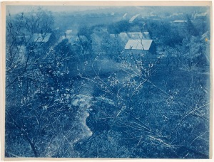 Everett Hubbard's Peach Tree cyanotype by Arthur Wesley Dow