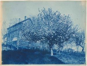 House and flowering tree cyanotype by Arthur Wesley Dow