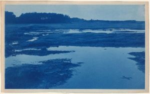 marsh cyanotype by Arthur Wesley Dow