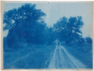 Willow Road in Newbury cyanotype by Arthur Wesley Dow