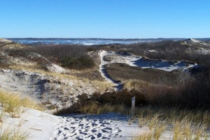 Trails in the dunes at Castle Neck in Ipswich