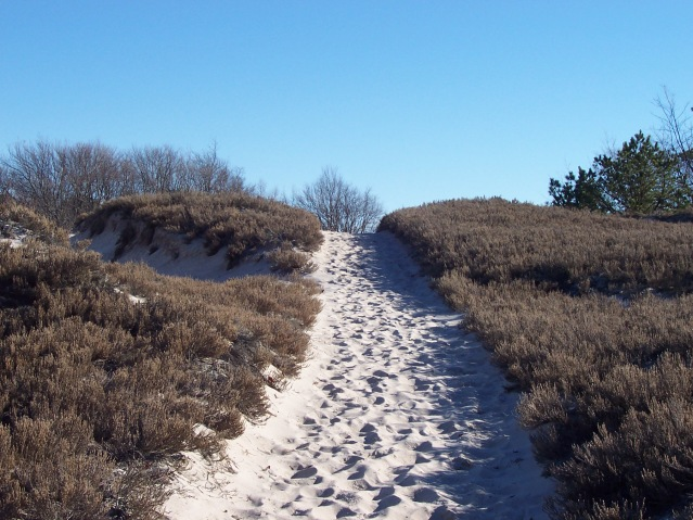 After entering the dunes from the right side of the Crane Beach parking lot, take a right at the first trail fork. This is one of several climbs you'll encounter along the way.