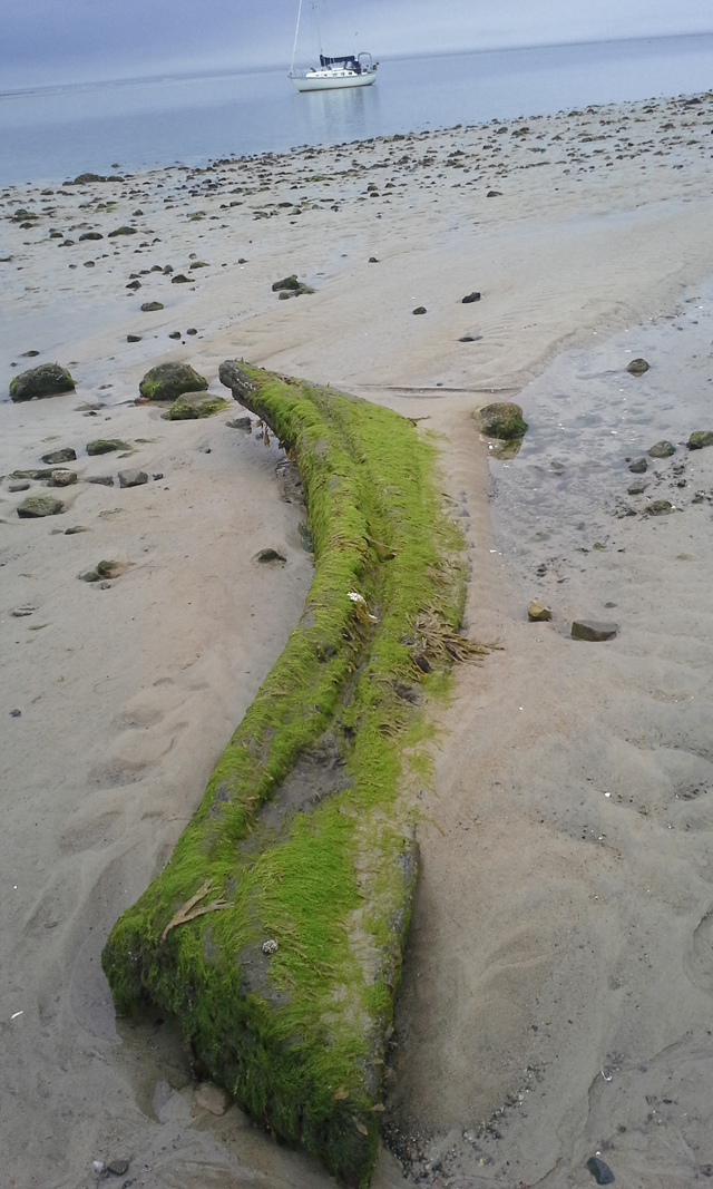 A section of the ship, probably the bow, now lies on Steep Hill Beach. the remainder of the ship lies just offshore and is marked by navigation buoys. You can see just the edge of its skeleton by wading out in low tide.