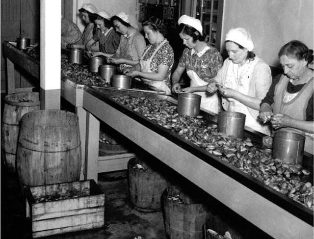 Shucking clams at Soffron Brothers in the 1950's