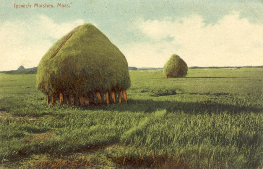 Marshes1910