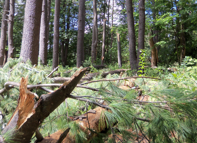 The storm jumped over our house and destroyed more trees in the woods less than 100 yards from our house.
