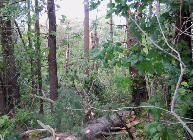 A microburst or small tornado touched down along Topsfield Road, breaking several trees, destroying a house and sending a utility pole crashing across the road.
