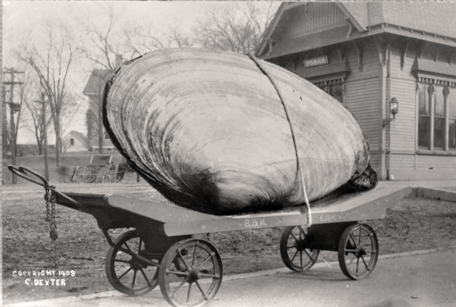 Hoax photo by Ipswich photographer George Dexter, 1908