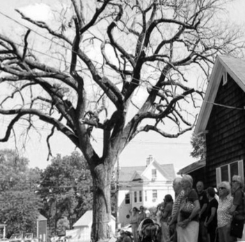 In the summer of 2012, East Street was line with people saying their farewells to the old elm tree.