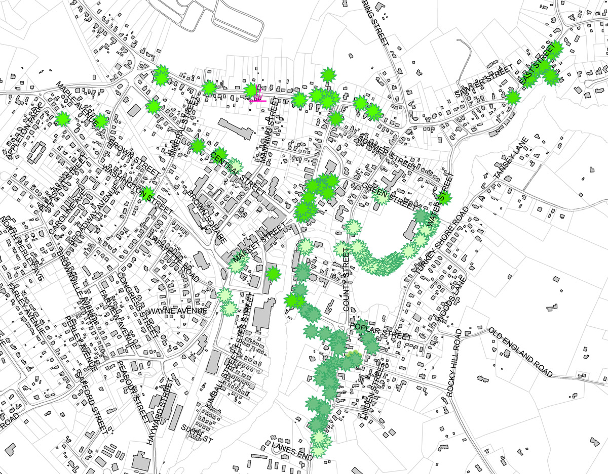 Map of surviving elm trees in Ipswich MA