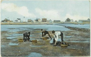 Harvesting clams at Plum Island