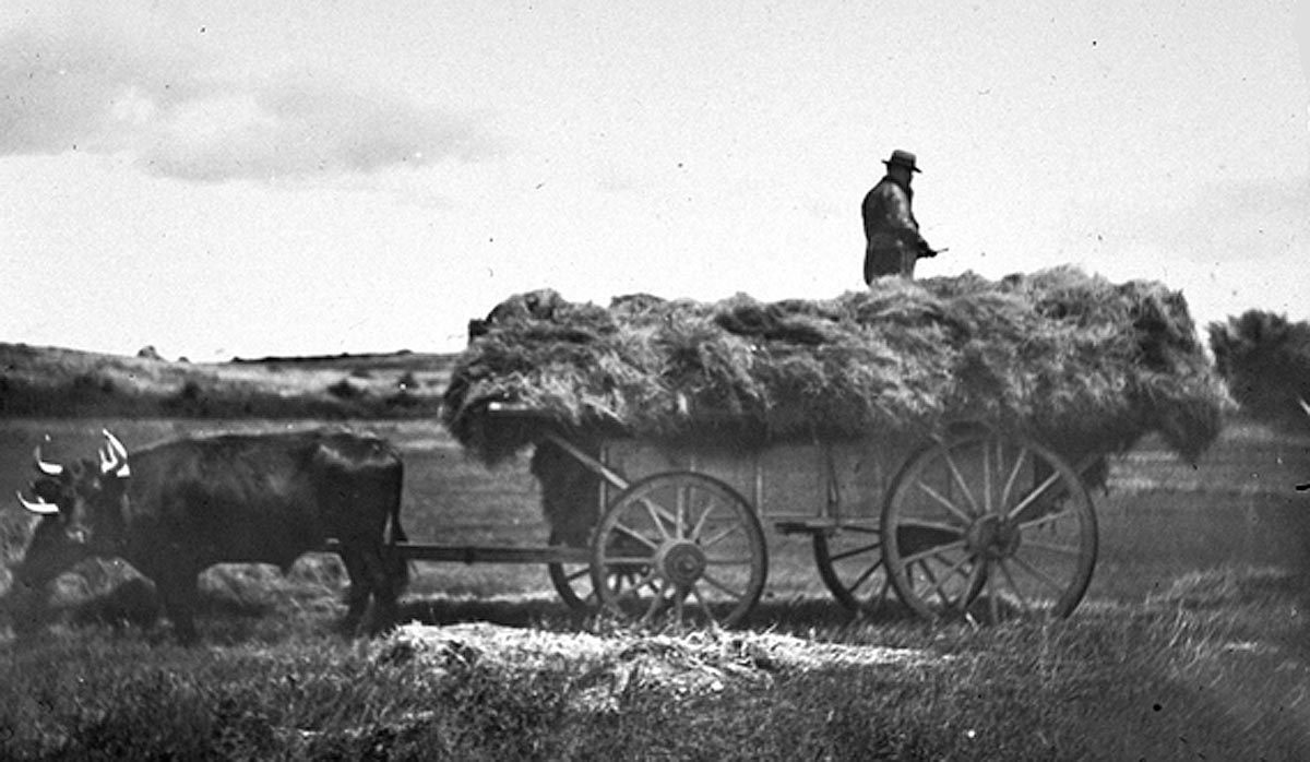 Hay being transferred to the wagon