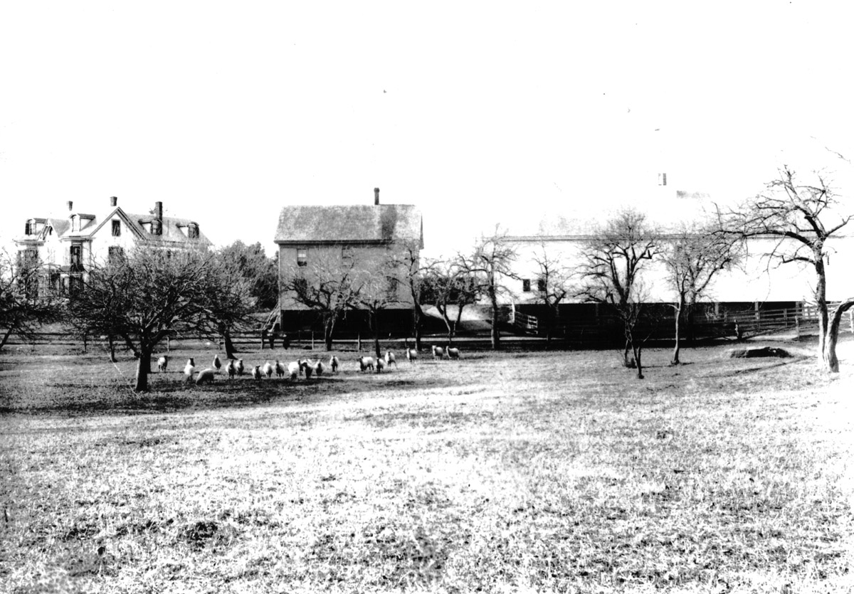 Perley Farm, 387 Linebrook Rd. in a photo dated about 1880. The smaller building in the middle of the photo was torn down and the large barn on the right was extended over its footprint.
