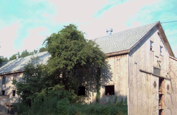 The Linebrook Farm barn, a familiar sight to people traveling on Linebrook Rd.