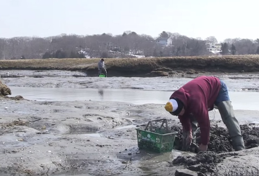 Clamming on Cape Ann