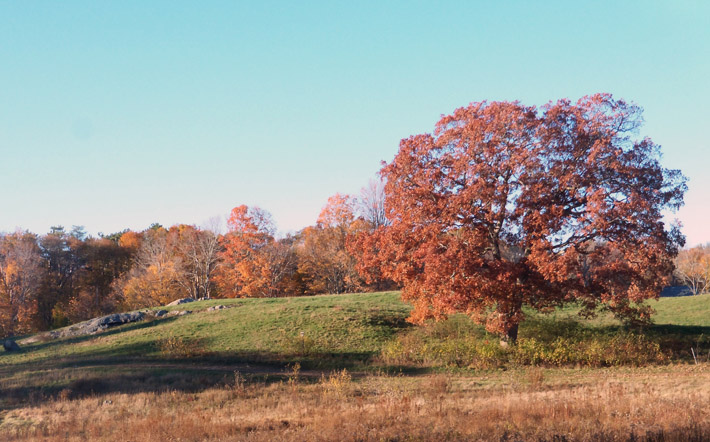 The Great Pasture at Appleton Farms