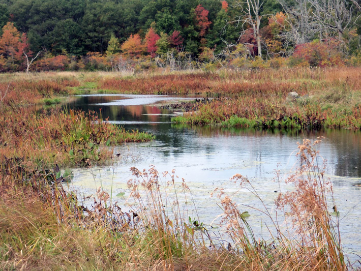 The Proctor Estate includes portions of the Miles River, parts of which are a flowing wetland.