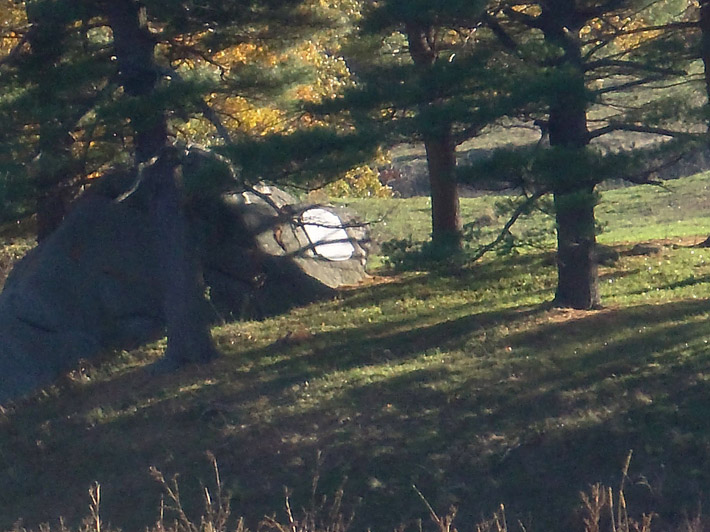 A plaque honoring early Ipswich settler Samuel Appleton is mounted to a huge boulder in the Great Pasture