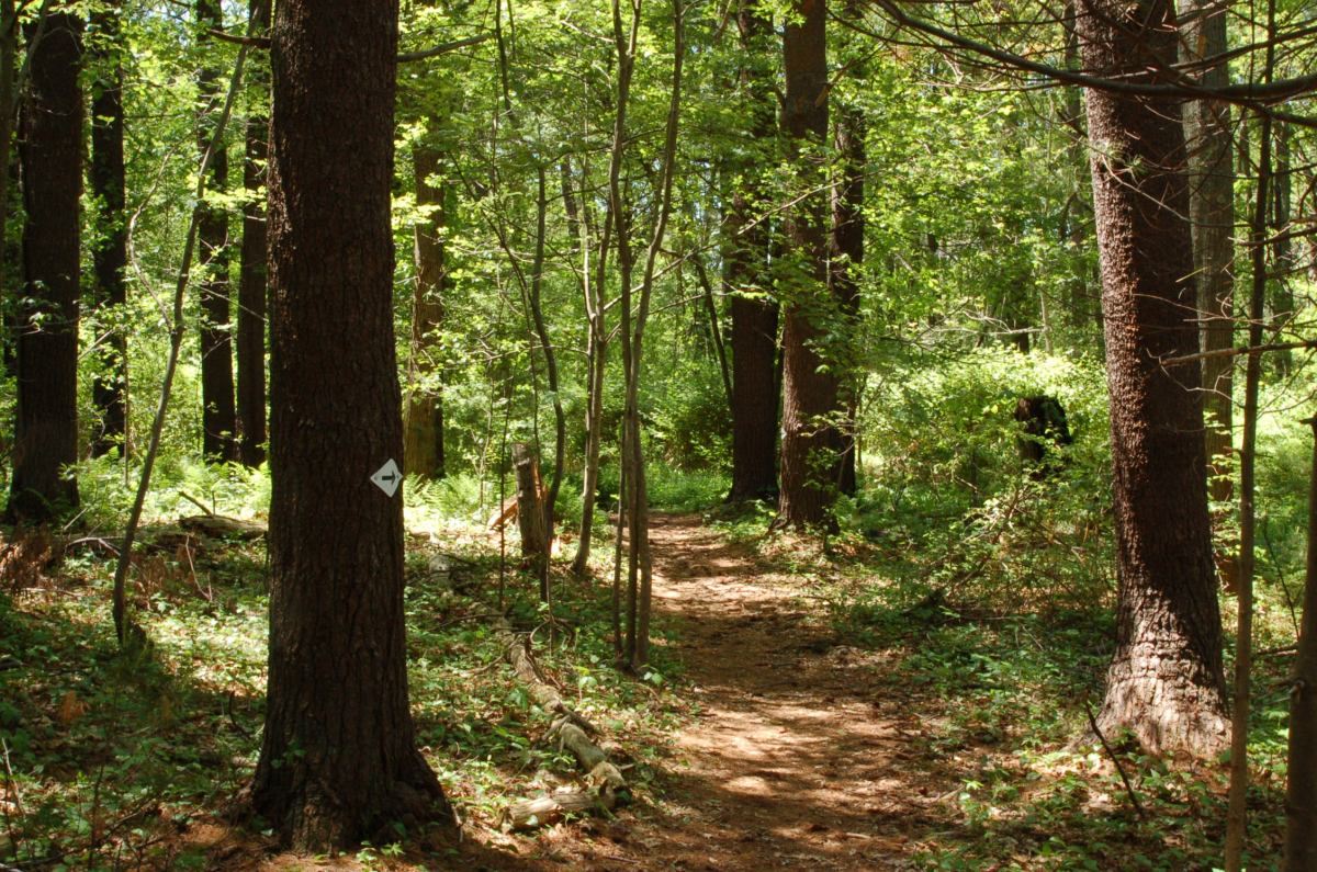 Hiking Trails And Bicycle Rides Stories From Ipswich