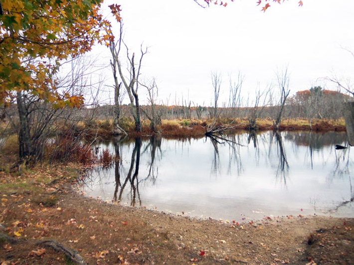 The Ipswich River widens to become a vast wetland