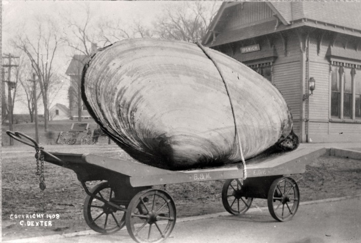 Clam photo hoax by George Dexter