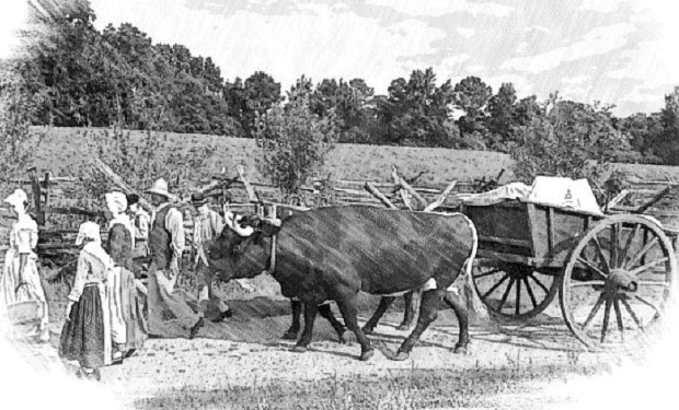 oxcart_sketch