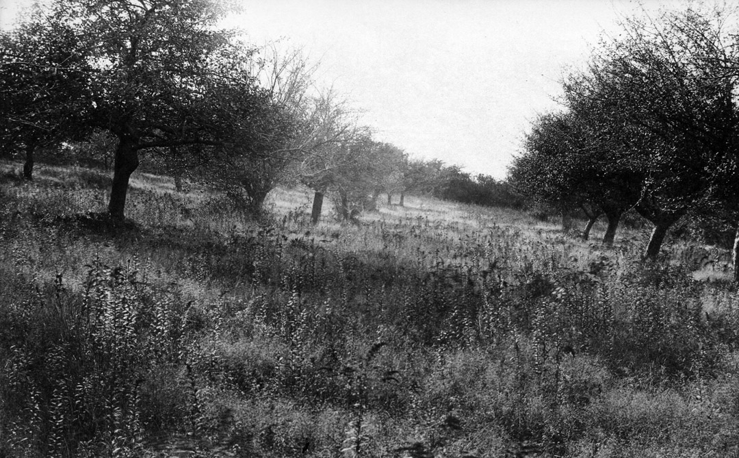 Orchard photo by Arthur Wesley Dow
