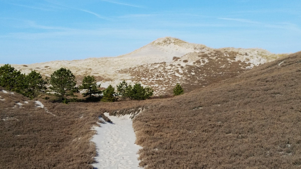One of the newer and larger dunes near the southern end of Castle Neck