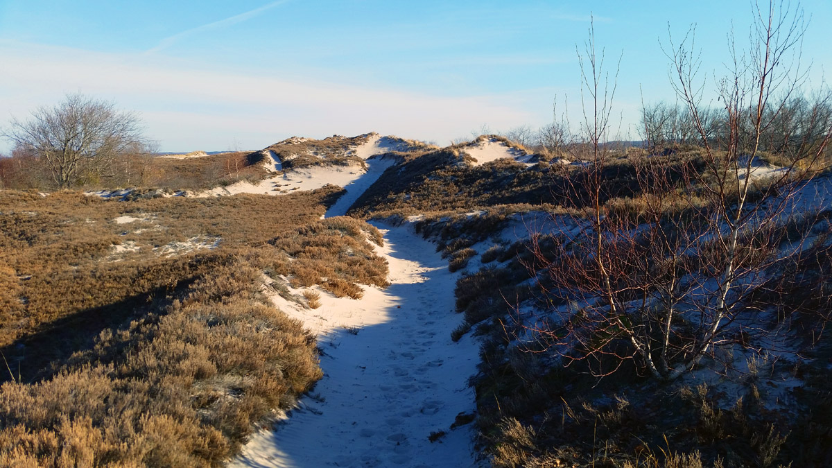 A network of marked trails takes you through the dunes at Castle Neck