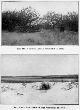 Before and after photos of the orchard on Wigwam Hill at Castle Neck by Charles Wendell Townsend