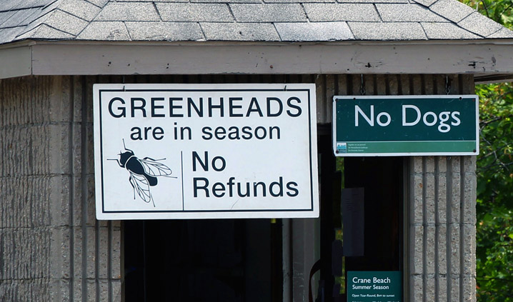 No refunds for greenheads at Crane Beach