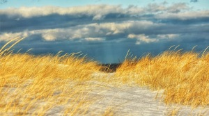 The Ipswich Dunes, photo by Sharon Scarlata
